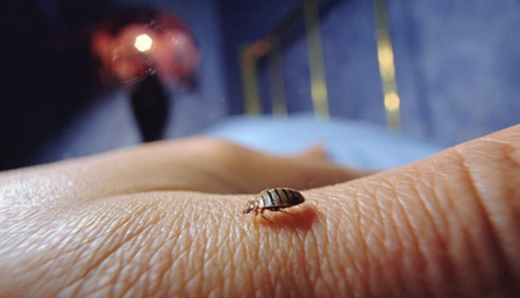 Rid Of Bedbugs